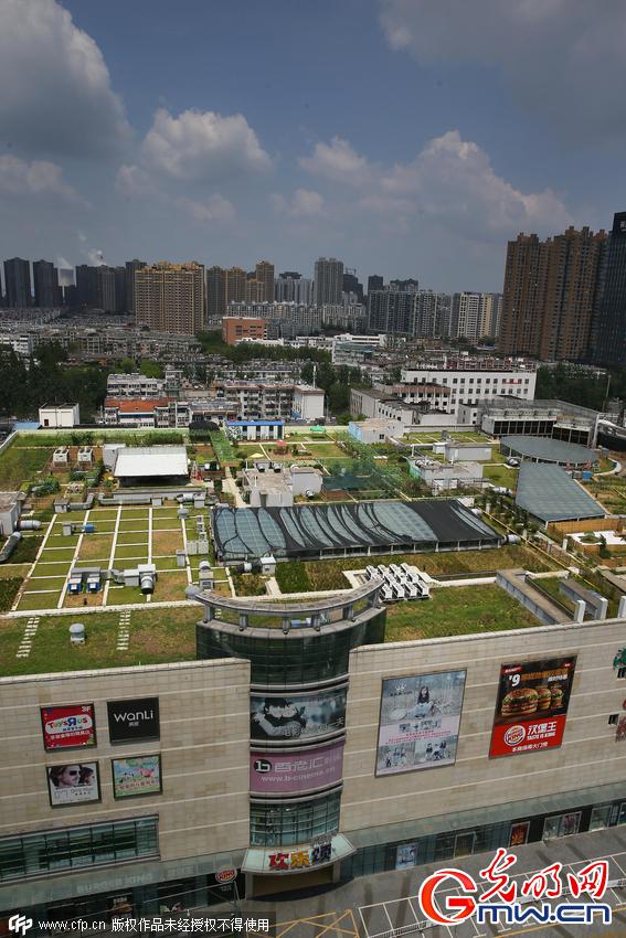 安徽出现首个天空农场 购物中心楼顶种蔬菜